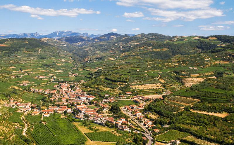 Conte di Campiano Brindisi - winnice w środku lata