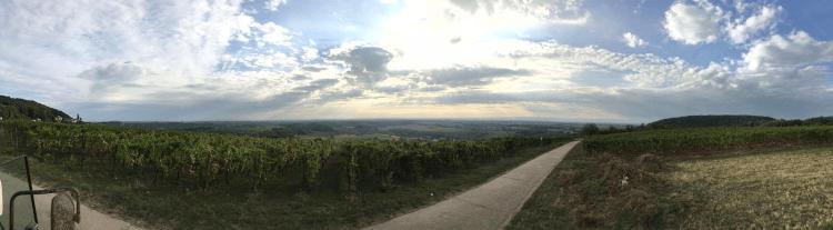 Winnice Lukas Kesselring w regionie Palatynatu w Niemczech
